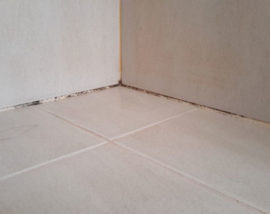 Mold-and-missing-grout